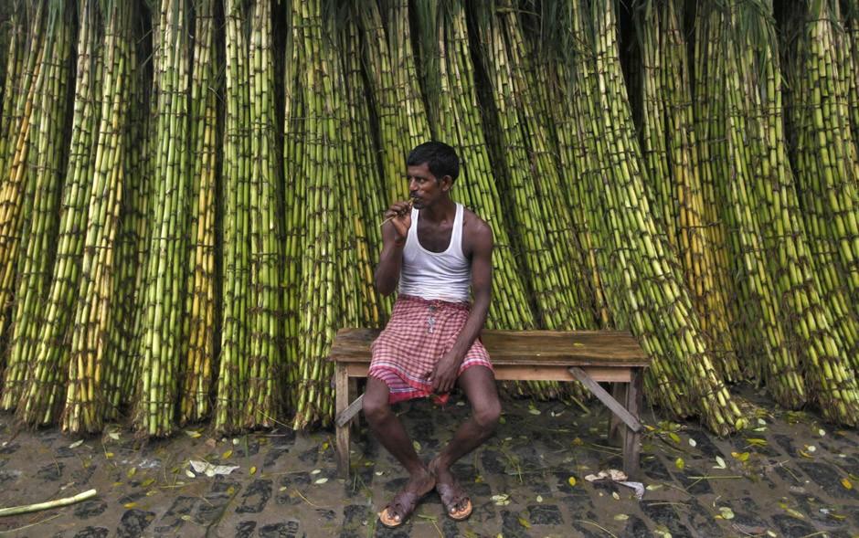 Seca afeta plantio de cana e Índia pode produzir menos açúcar em 2019/20 - Noticias