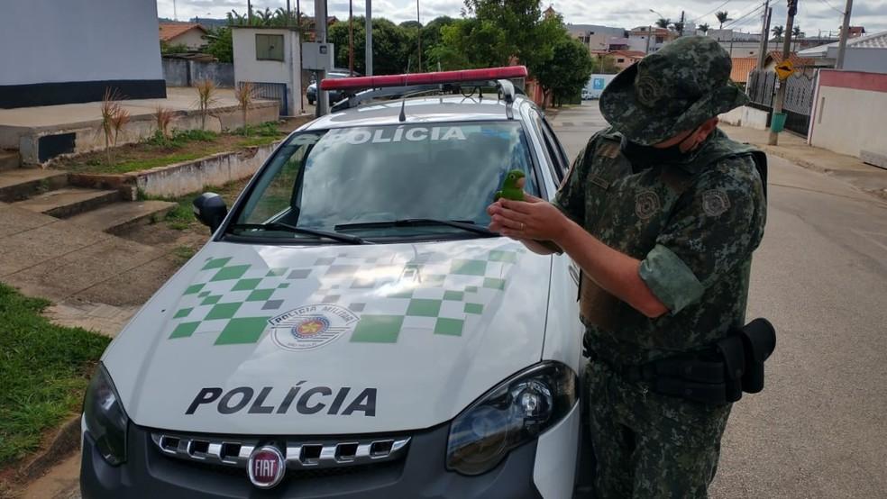 Polícia Ambiental apreende periquito que teve asas cortadas e multa responsável em Buri (SP) — Foto: Polícia Ambiental/Divulgação