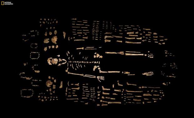 Foto da revista National Geographic mostra ossos recolhidos por pesquisadores na África do Sul que foram identificados como sendo de uma nova espécie do gênero humano (Foto: Robert Clark/National Geographic, Lee Berger/University of the Witwatersrand via AP)