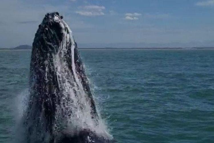 VÍDEO: Baleia dá salto ao lado de barco e surpreende casal em SC