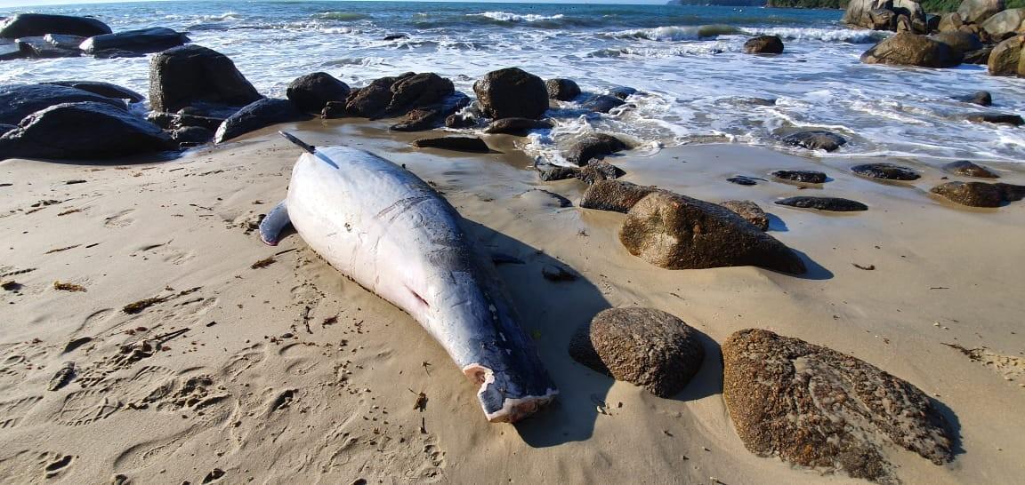 Golfinho, pinguim e tartaruga são encontrados mortos em praia de Porto Belo - Notícias - Plantão Diário