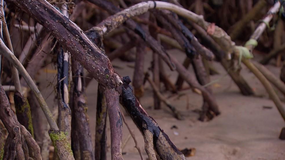 Raízes nos manguezais ficaram cobertas por óleo no Litoral de Pernambuco — Foto: Reprodução/TV Globo