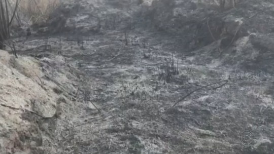 Incêndio de três dias em mata nativa ameaçou área de preservação ambiental