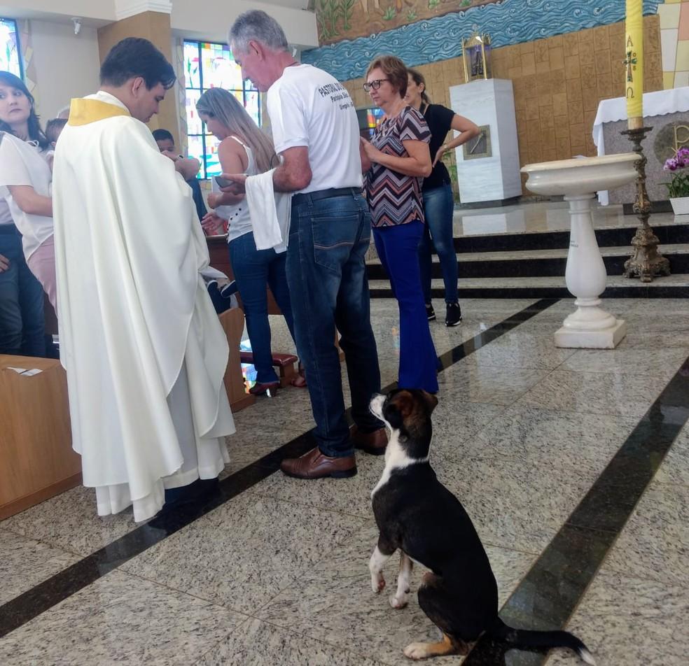 Cachorro ficou com as  duas patas para o alto durante a entrega da hóstia — Foto: Leonardo Concon