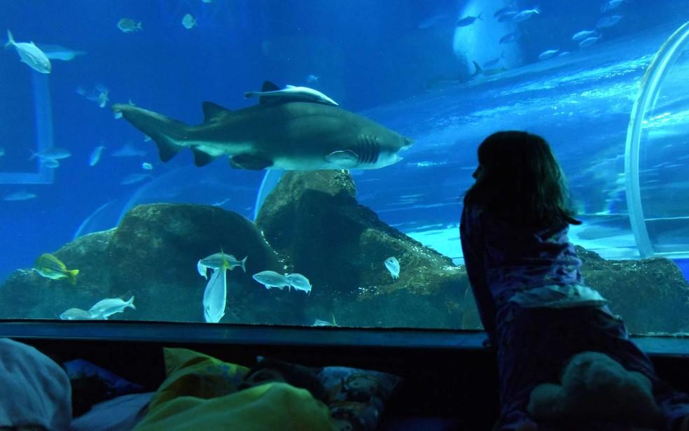Em novembro, mês de aniversário do AquaRio, crianças podem dormir no aquário às sextas e sábados — Foto: Alexandre Macieira/Divulgação