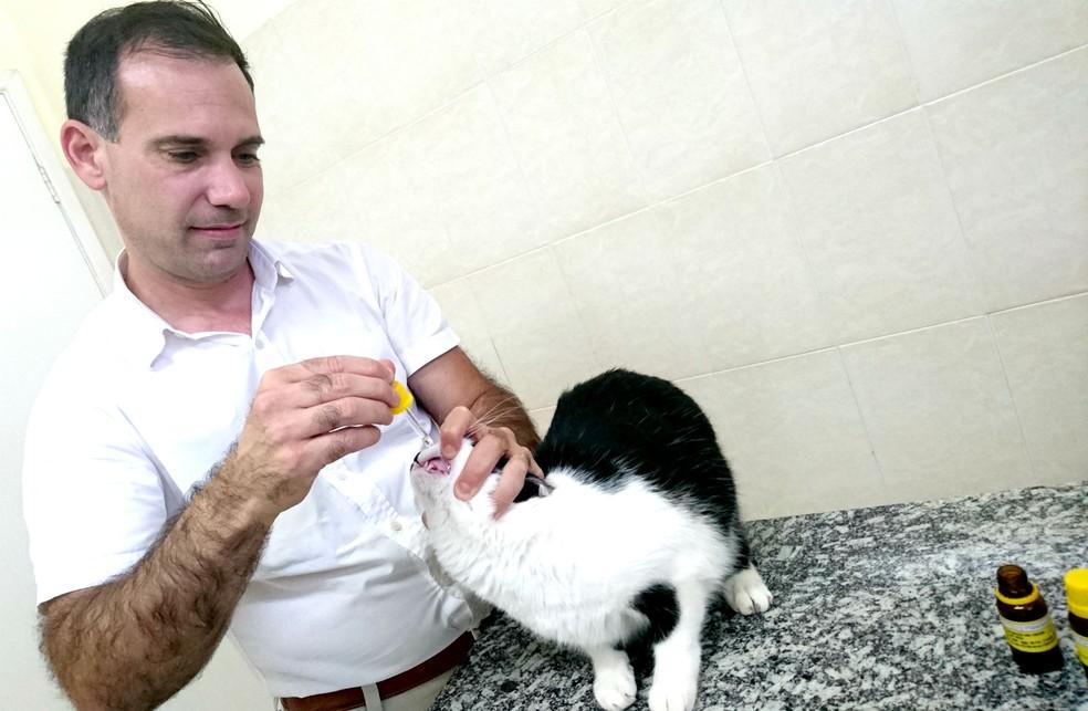 Médico veterinário Paulo Zanardi ministra gotas para a gata Lucy: resultados surpreendentes e muitas vezes rápidos (Foto: Sérgio Pais)