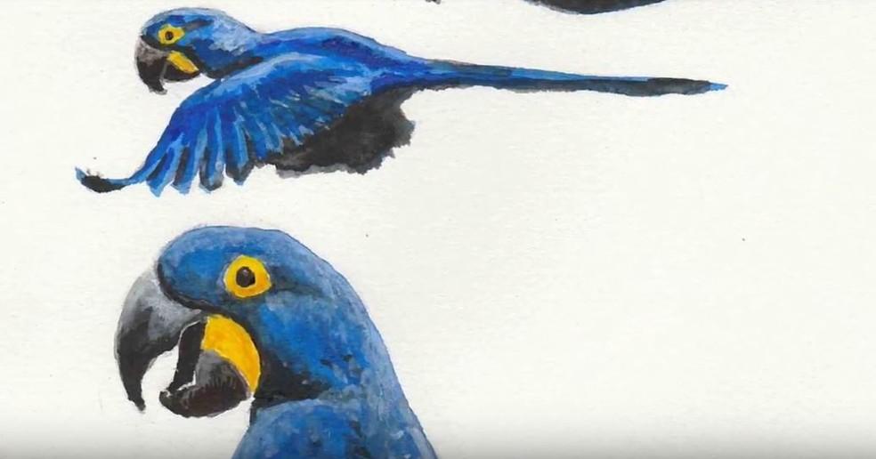 Matthias mantém contato com as aves e com o desenho desde criança (Foto: Passarinhada Musical)