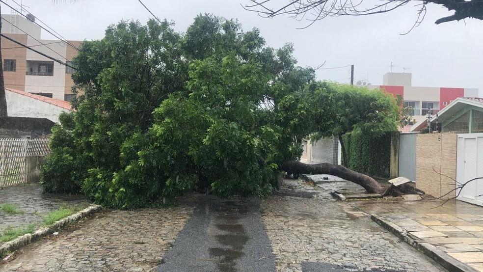 Árvore caiu no bairro dos Bancários, em João Pessoa — Foto: Walter Paparazzo/G1