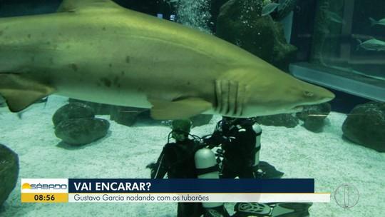 """""""Vai Encarar?"""" mergulha com tubarões e mostra espécies da Região dos Lagos no AquaRio"""