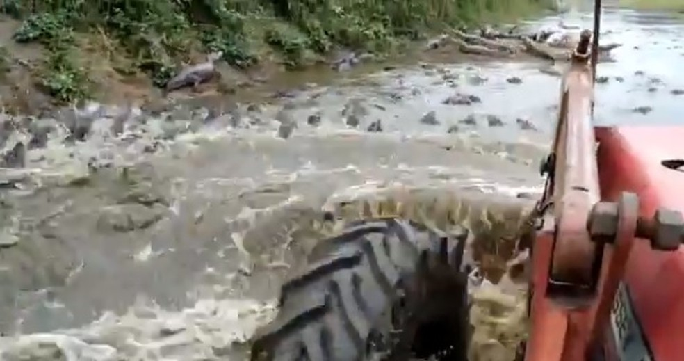 """Trator """"atropelando"""" Jacarés no Pantanal — Foto: PMA / Divulgação"""