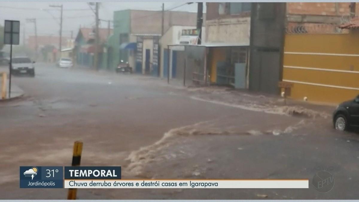 Temporal danifica telhados de 3 escolas e derruba 16 árvores em Igarapava, SP - G1