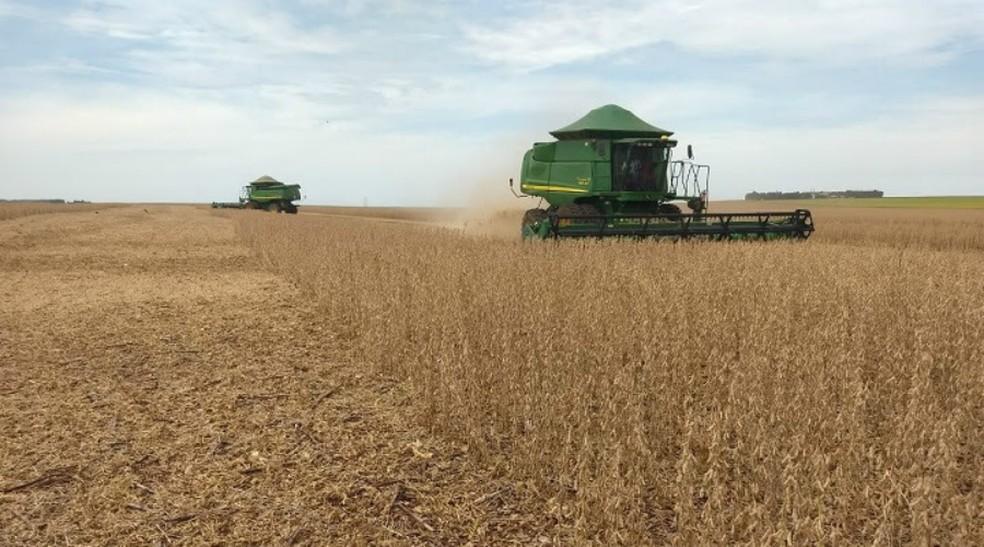 Com expectativa de produizir maior safra da história, MS colheu 5,1% da área cultivada com a soja (Foto: Milton Nantes/Aprosoja/MS )