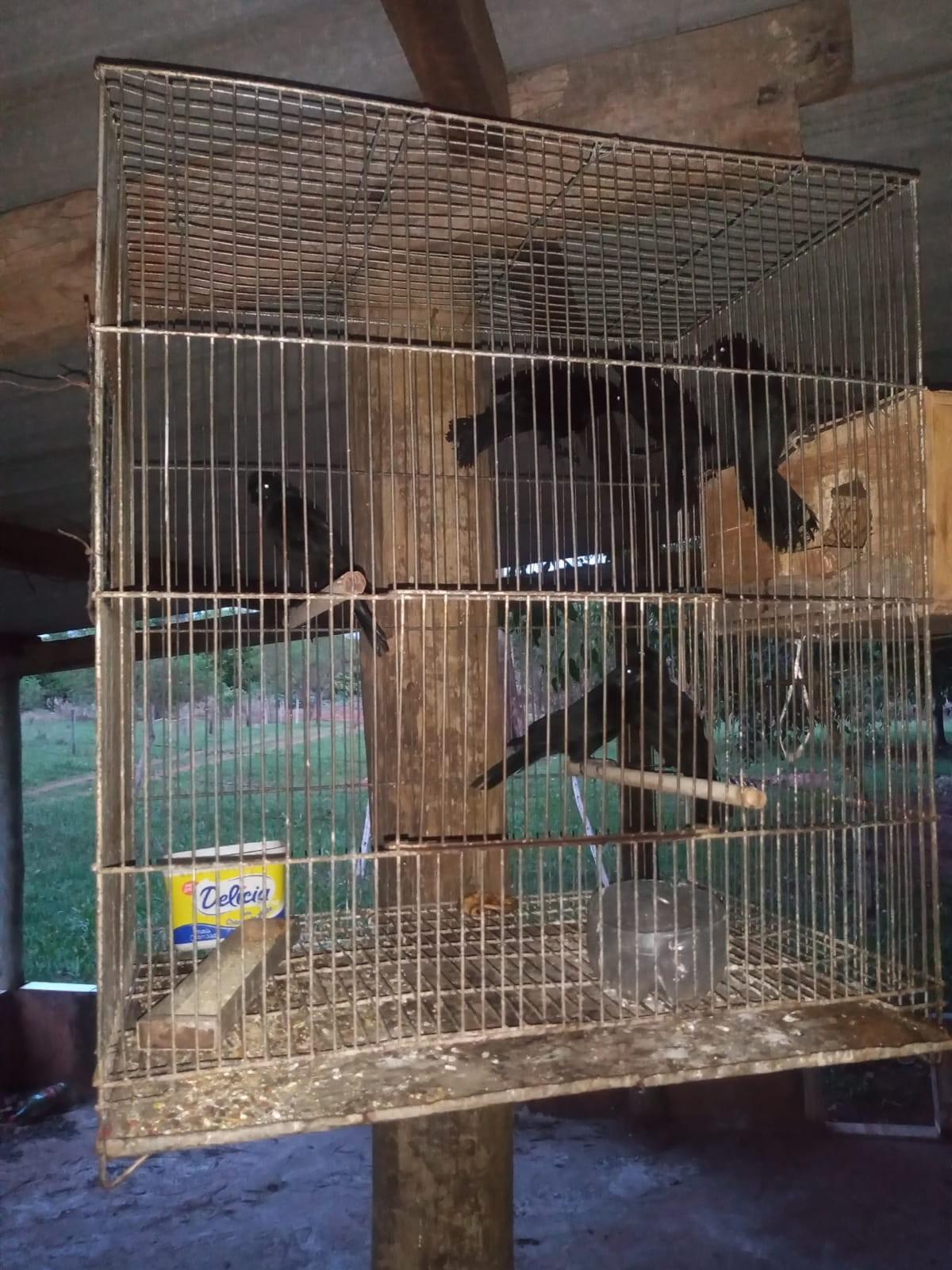 Polícia Ambiental resgata 13 aves que eram mantidas em cativeiro e multa homem em R$ 6,5 mil