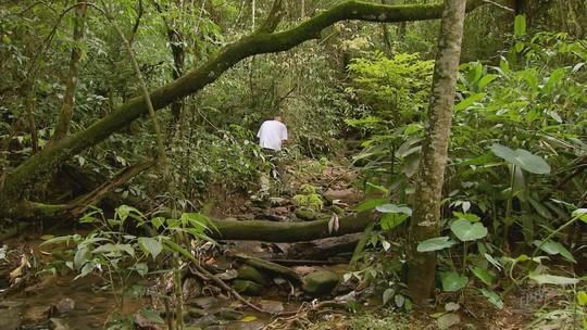 Macacos são encontrados mortos no bairro Centenário, em Varginha, afirma Secretaria de Saúde