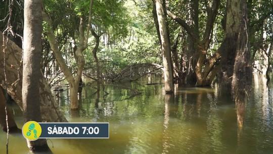 Veja o destino do 'Partiu Amazônia' deste sábado (31)