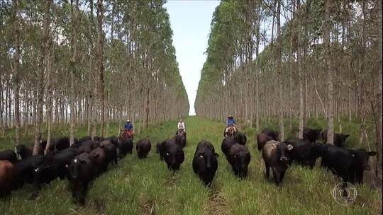 Produtores rurais do Pará tentam manter preservação na Amazônia, mas crimes ambientais continuam
