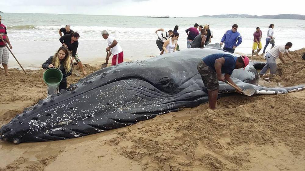 [Imagem: aptopix-brazil-beache-fran-b.jpg]