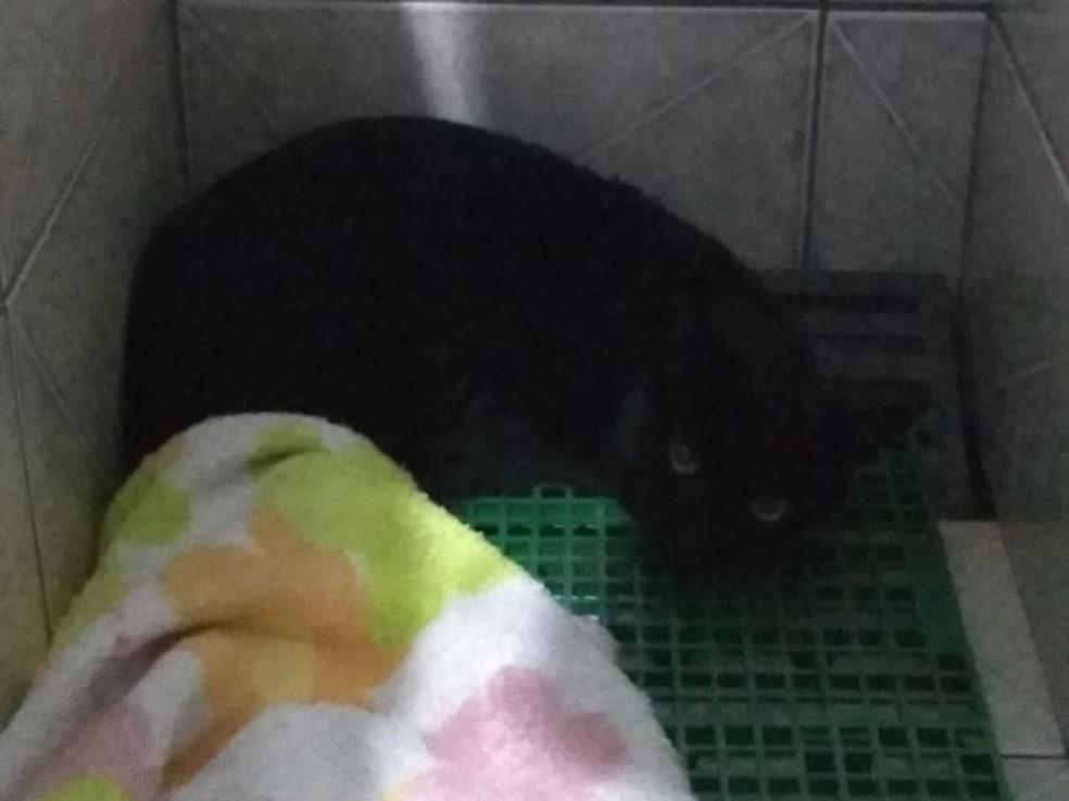 Protetora de animais que matou pit bull em Itapeva diz que agiu para defender gato — Foto: Arquivo Pessoal