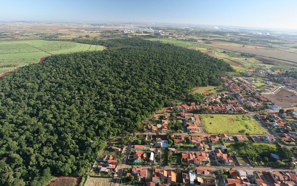Recuperação de florestas e vegetação natural é crucial para o equilíbrio dos ecossistemas — Foto: Divulgação/Arquivo Pessoal