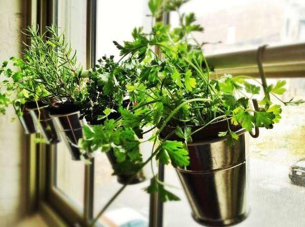 Uma barra apoia os temperos presos à janelas, mantendo as plantas perto do sol  (Foto: Pinterest/Reprodução)