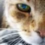 Proteção de Tela: Winsome Cats