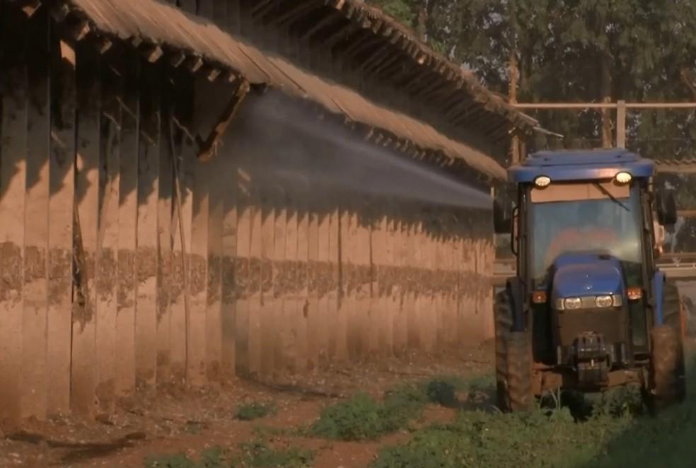 Produtores de ovos de Bastos jogam água e produto à base de eucalipto nas galinhas para amenizar calor — Foto: TV TEM/Reprodução
