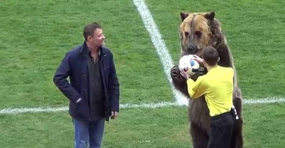 Urso entrega a bola (Foto: YouTube)