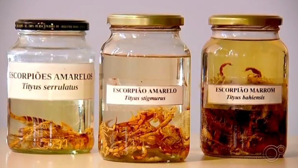 Aparecimento de escorpiões no verão preocupa moradores de Sorocaba — Foto: Reprodução/TV TEM