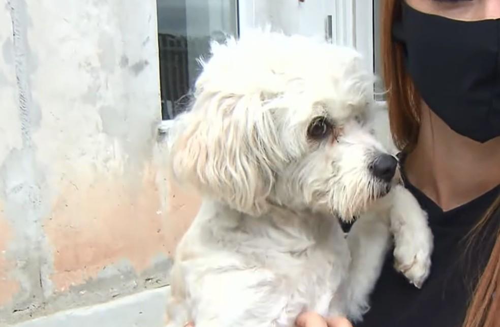 Animal receberá tratamento veterinário, em Curitiba — Foto: Reprodução/RPC