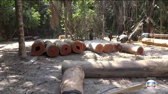 PF faz operação contra roubo de madeira de terra indígena do Pará