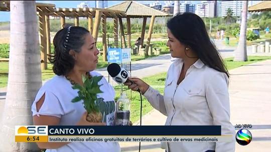 ONG realiza oficinas de terrários e cultivo de ervas medicinais em Aracaju