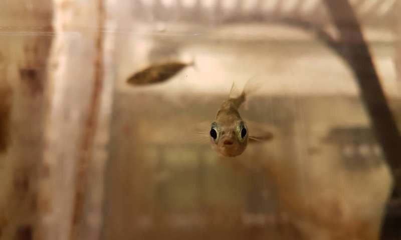 Mary, quando era adolescente, no aquário da Escola de Ciências da Vida, na Universidade de Nottingham (Foto: ©Dr. Laura Dean)
