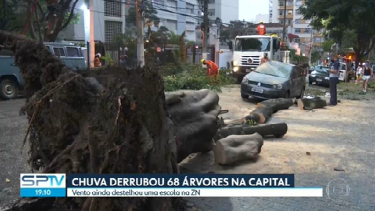 Chuva derruba 68 árvores na capital paulista