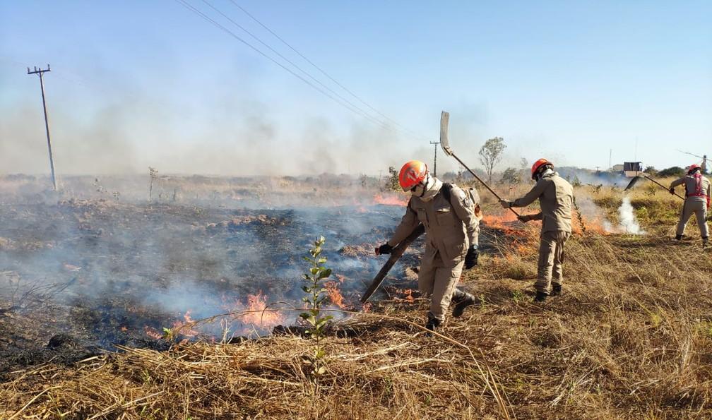 Incêndio foi controlado em pasto em MT — Foto: Corpo de Bombeiros