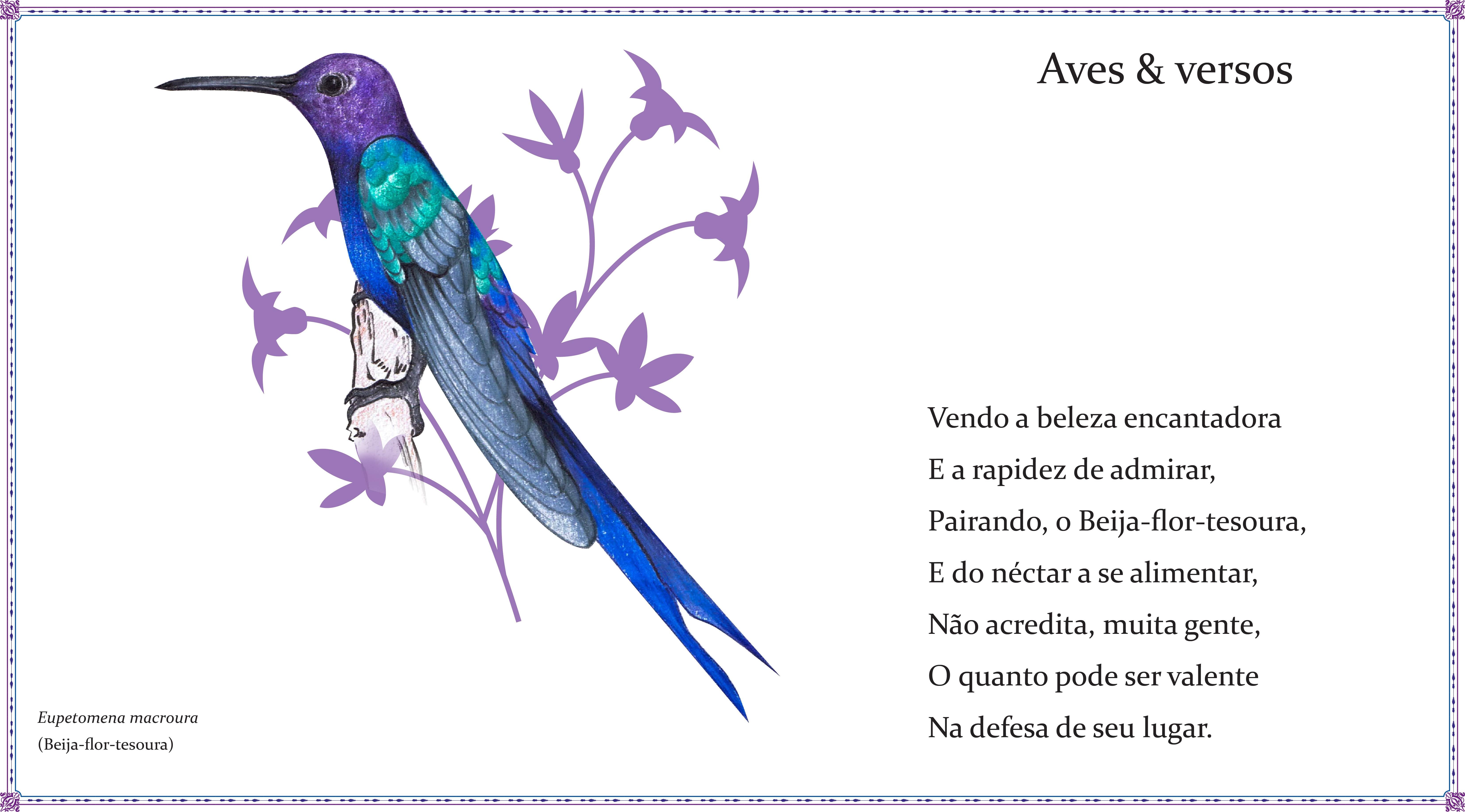 Amigos fazem poesias e ilustrações para homenagear as aves do Brasil