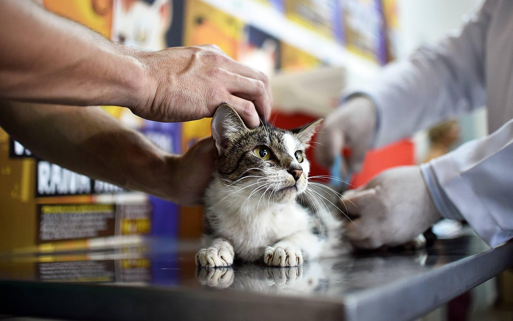 'Dia D' de vacinação contra raiva animal acontece no sábado (22), na Paraíba - Radio Evangelho Gospel