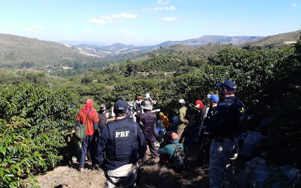 Mais de 60 pessoas são resgatadas em situação de trabalho escravo em lavouras cafeeiras do Sul de Minas — Foto: Policia Rodoviária Federal
