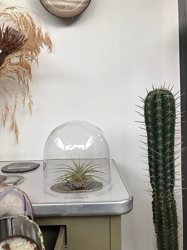 Plantas pequenas: 6 espécies lindas para quem tem pouco espaço (Foto: Michell Lott)