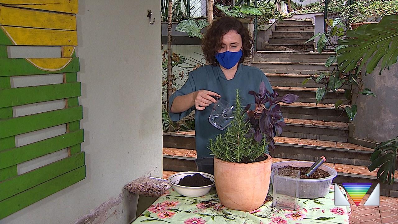 Dica Verde: como fazer replantio de plantas.