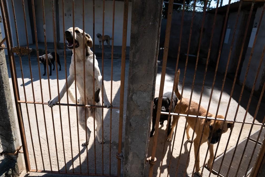 Abrigo da Amigos de São Francisco fica no interior de São Paulo e tem capacidade para aproximadamente 100 animais — Foto: Marcelo Brandt/G1