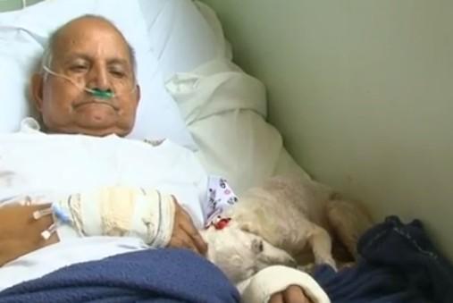 Cadela visita dono, de 84 anos, internado em hospital de Guarapuava - Notícias - Plantão Diário