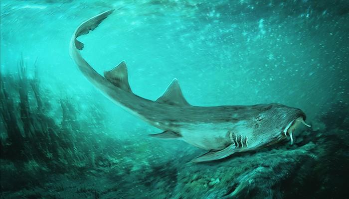 Ilustração do que teria sido a aparência do tubarão (Foto: Divulgação/Field Museum)