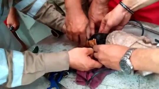 Bombeiros e PM montam 'operação' para salvar filhote de cachorro que prendeu cabeça em cano; veja vídeo