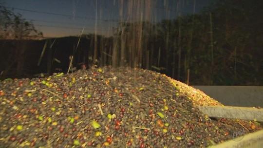 Produtores fazem colheita noturna para dar conta da safra do café