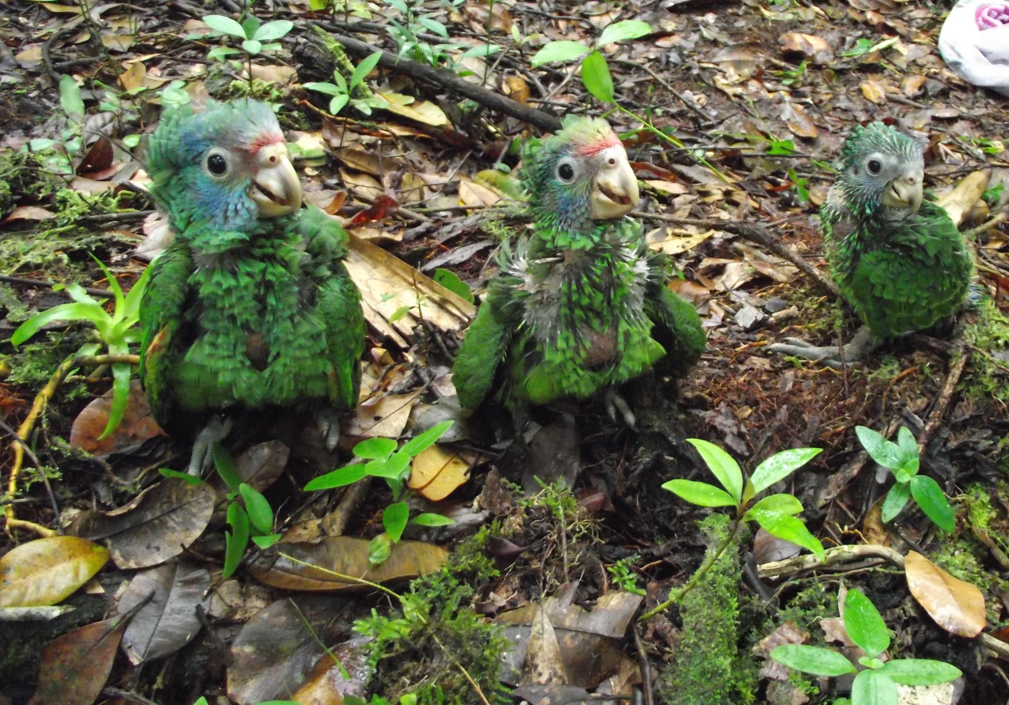Projeto conta com vaquinha online para promover contagem de papagaios - Noticias