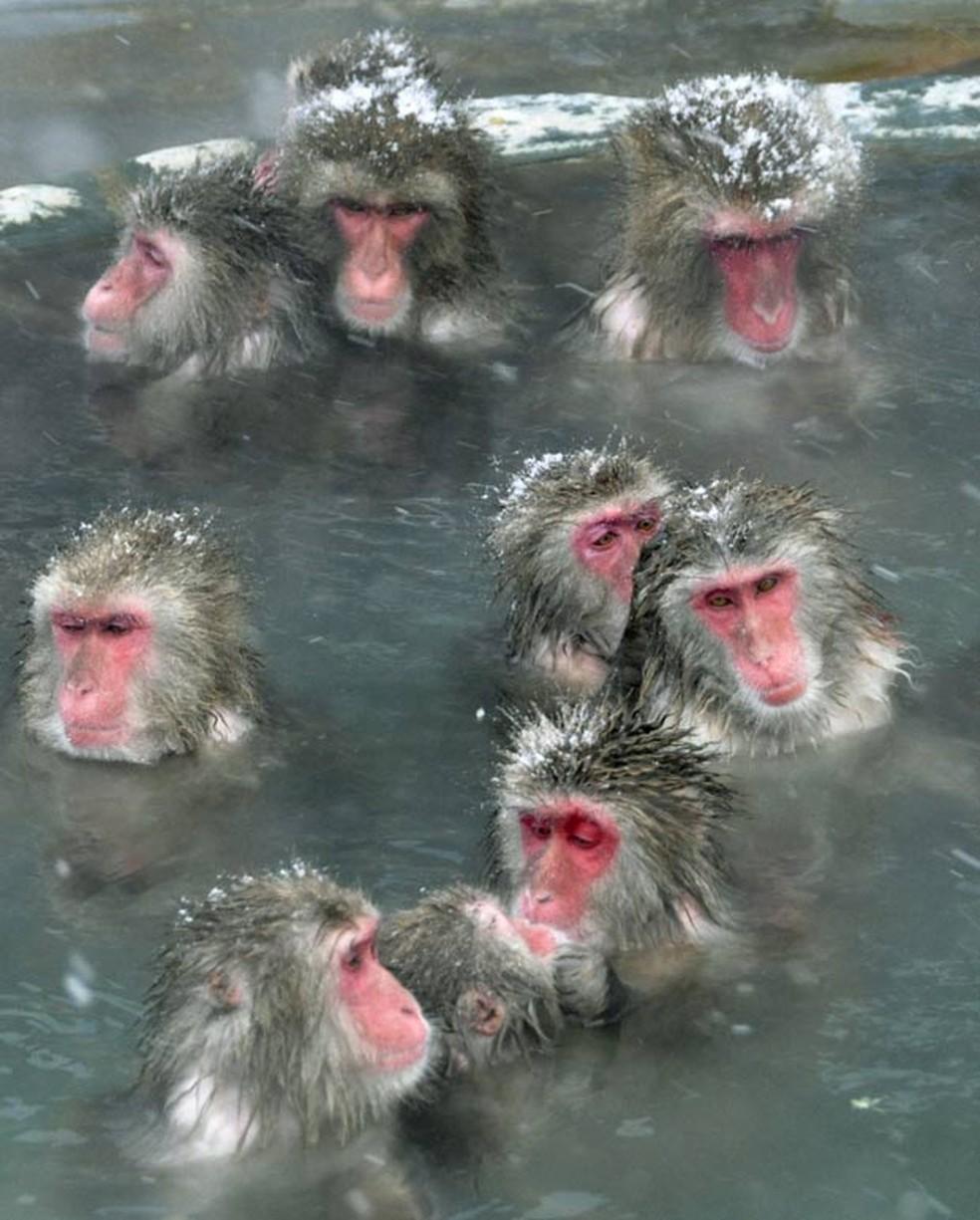 Para escapar do frio, macacos tomam banho em fonte de água quente em Hakodate, na ilha de Hokkaido, no norte do Japão. (Foto: Reuters)