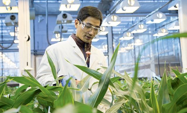 A Syngenta emprega cerca de 150 cientistas em Beijing. Um dos objetivos é elevar a produtividade agrícola chinesa (Foto:  Imagens cedidas pela Syngenta)