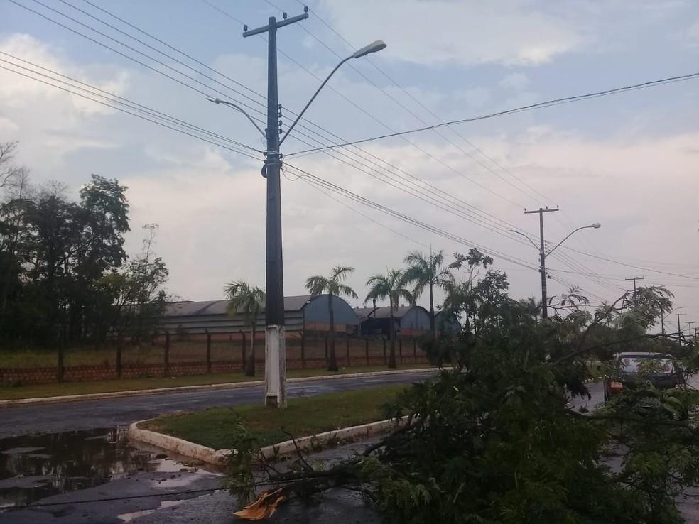 Várias árvores da cidade foram arrancadas (Foto: Reprodução/WhatsApp)