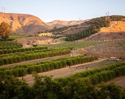 Mudanças climáticas abrem caminho para cultivo de café nos Estados Unidos