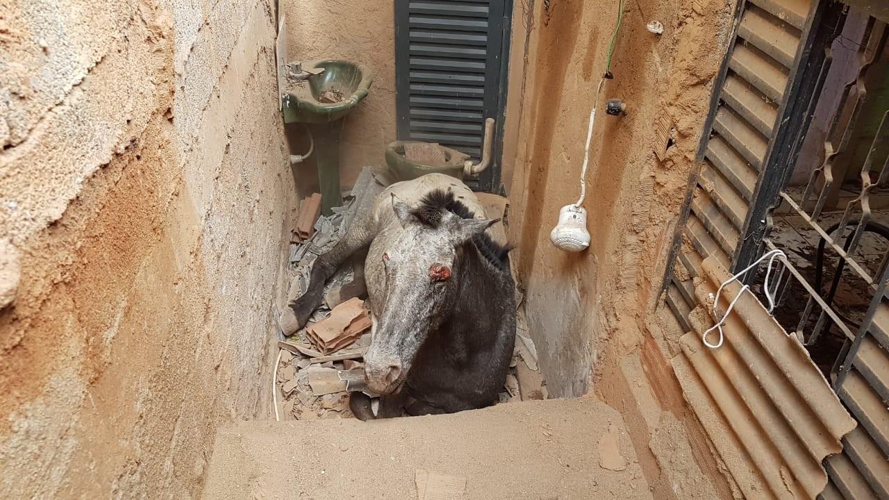 Égua cai de barranco, quebra telhado e fica presa dentro de casa em Timóteo - Notícias - Plantão Diário